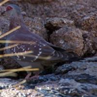 Mowani Lodge, birds at the pond