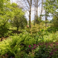 Berkshire branch of the Cambridge Society visit to Aberglasney