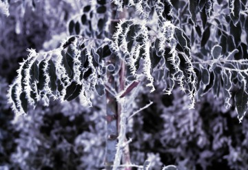 Winter frost patterns