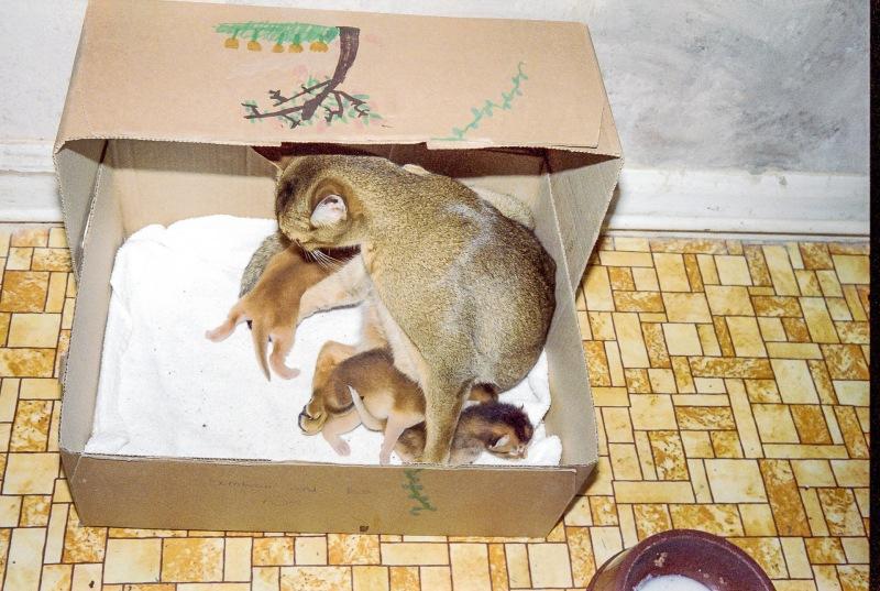 Simba and her kittens