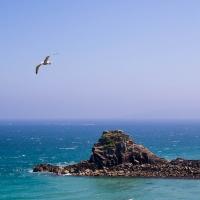 Gull on Herm