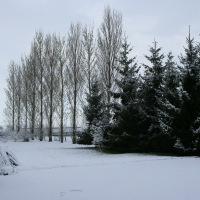Snow in Kingswood