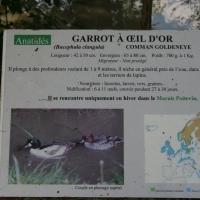 Les Oiseaux du Marais Poitevin, Saint-Hilaire-la-Palud, Marais, France, 2009