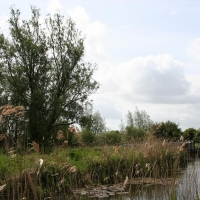 Cambridge Society, Wicken Fen