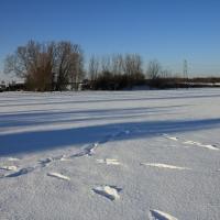 Field pond