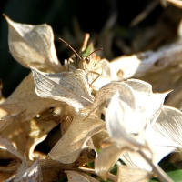 Cricket insect (bug), 2010