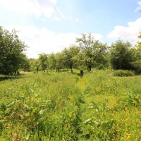 Ken and Sue's orchard, Holton