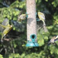 Garden Birds 2011
