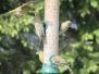 2011 Garden Birds