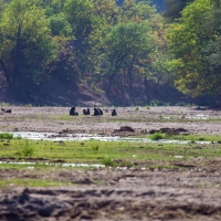 River bed near to Khowarib Camp