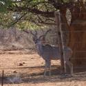 Private game reserve outside Outjo