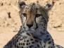 2013 - Namibia Day 15 Okonjima