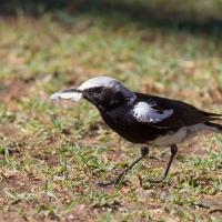 Ai Aiba lodge bird