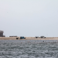 Boat trip from Walvis Bay - Shore vehicles for sea lions viwing