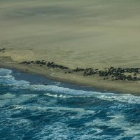 Sea lions on Namibia coast line