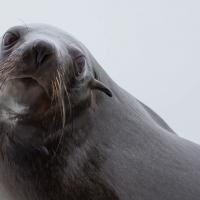 Boat trip from Walvis Bay - Sea Lion