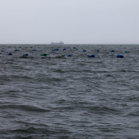Boat trip from Walvis Bay - Oyster farm