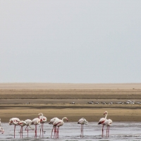 Boat trip from Walvis Bay - Flamingo