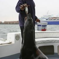 Boat trip from Walvis Bay- Sea Lion