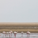 Boat trip from Walvis Bay - Flamingo