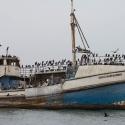 Boat trip from Walvis Bay - Cape Cormorant