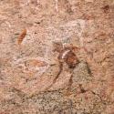 Namibia, Rock art, Brandberg