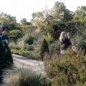 Cambridge botanic garden 29th September 2013