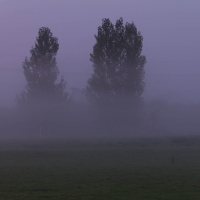 Mist over our field