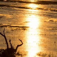 Sunset over Chobe