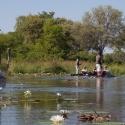 Mokoro trp on the Kwhai