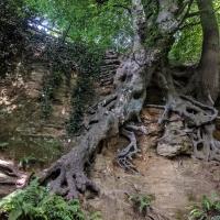 Amazing tree roots