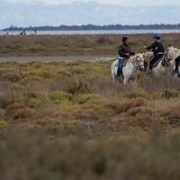 Saintes-Maries-de-La-Mer Camargue horses