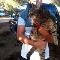 Camp cat