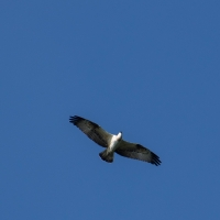 Cormoranche-sur-Saone