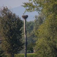 Cormoranche-sur-Saone - Storks nest