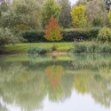 Luxémont-et-Villotte - Camping Nature hedge