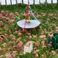 Glastonbury model by Bella's Field