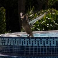 La Grande Mare hot tub and ducks
