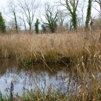 Mottisfont Wetland walk