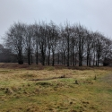 Hatfield Forest on new years eve