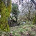 Fforest fields Campsite in Hundred House, walk