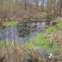 Fforest fields Campsite in Hundred House, pond walk