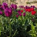 Oxford Botanical Gardens