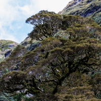 Doubtful Sound, Inspiration for the Ents