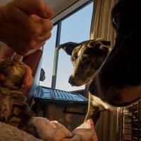 Kitten watch, Pippi and Bonny