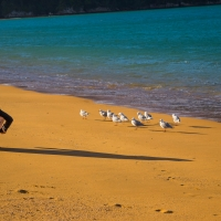 Tata beach in the Abel Tasman