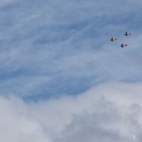 Devonport  fly over