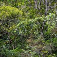 Waipu Gorge, Piroa Falls