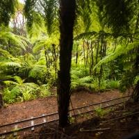 Driving Creek - Ferns
