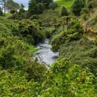 Te Waihou Walkway